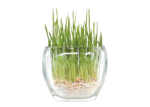 grass-glass